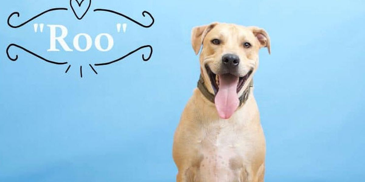 Adoptable pooch loses doghouse in couple's divorce