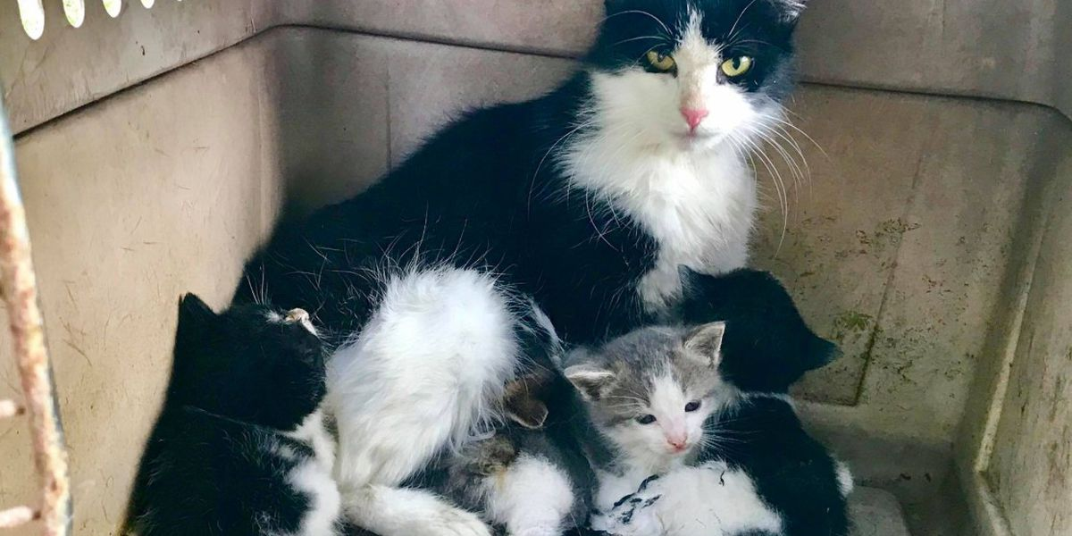Montgomery firefighters rescue cat, 4 kittens from house fire