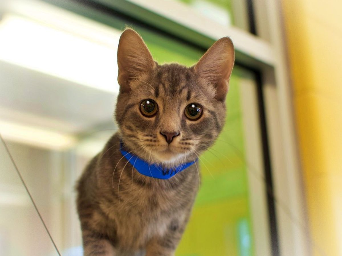 More than 50 cats available for adoption at Montgomery shelter