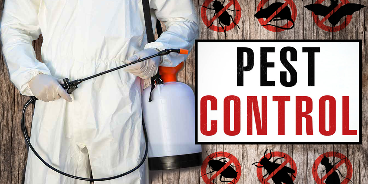What to do before hiring a pest control service