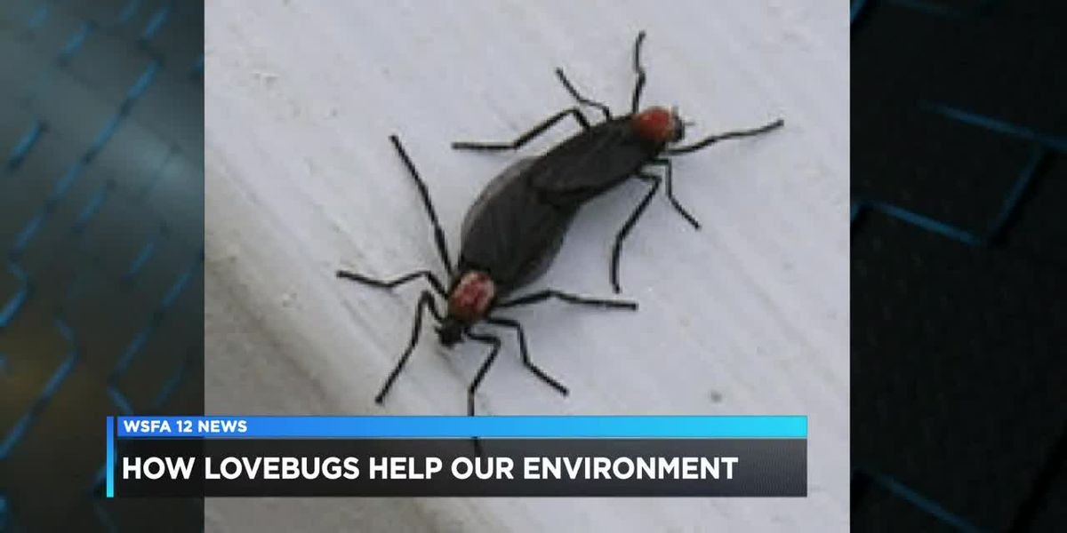 How love bugs help our environment