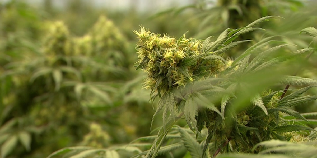 Medical marijuana commission to hold first meeting