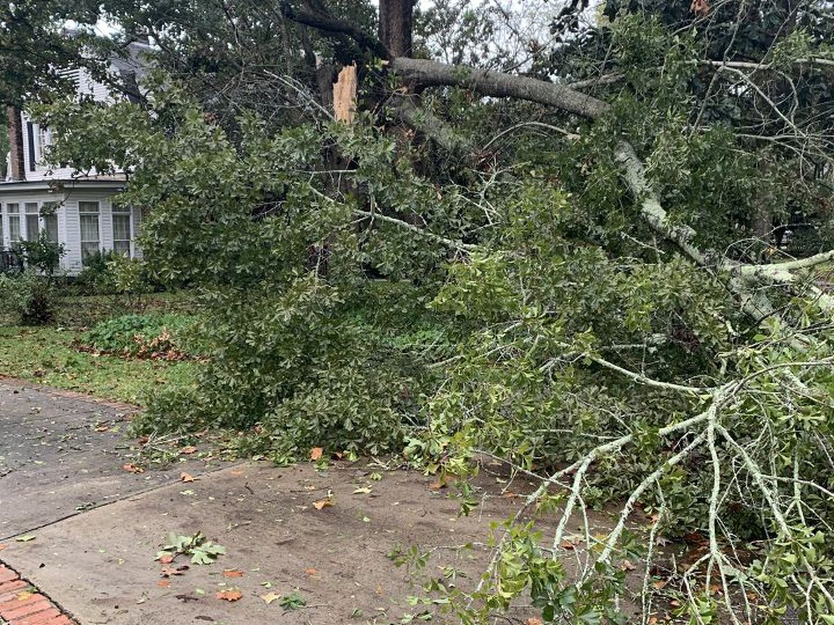 Thousands still without power as Zeta cleanup continues in Alabama