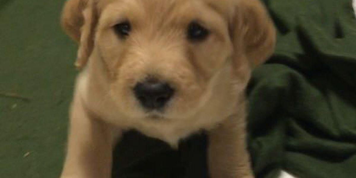 SLIDESHOW: WSFA 12 News Puppy