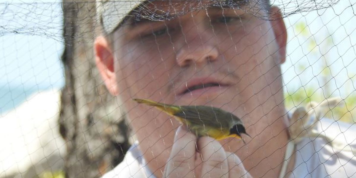 Ken Hare's Natural Alabama: New bird banding project builds on years of research