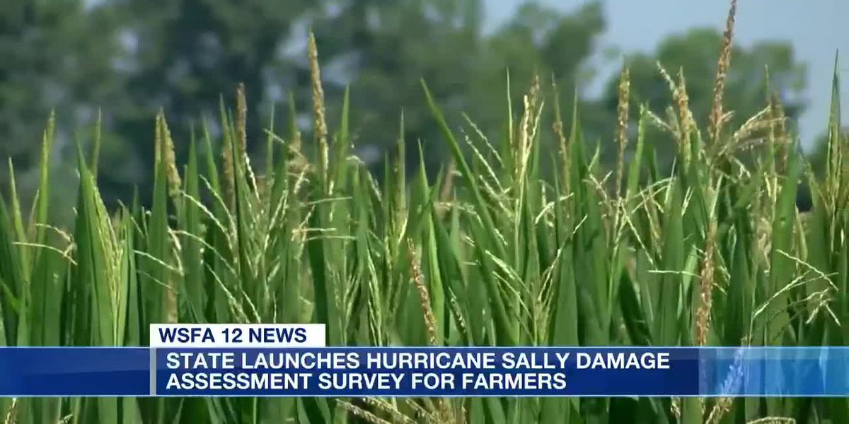 State launches Sally damage assessment survey for agriculture