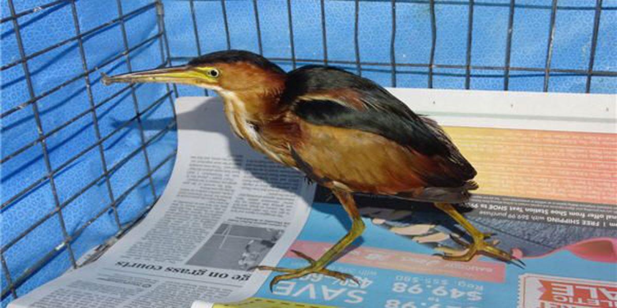 Ken Hare's Natural Alabama: AL birders assist in deep-sea bird rescue