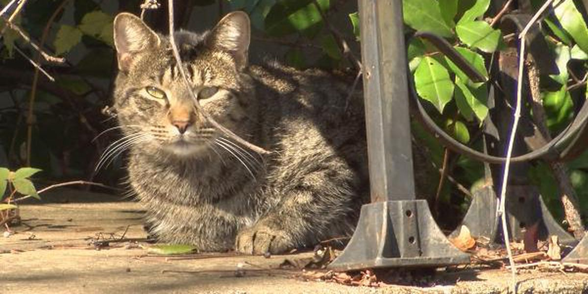 Lee County residents voice animal control concerns