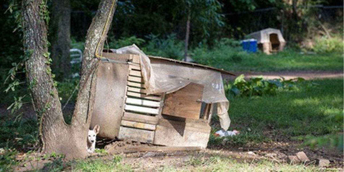 Police seize 30 animals in cruelty case