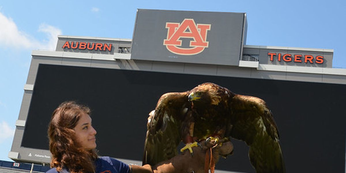 New eagle ready to take flight ahead of Auburn's first game of the season