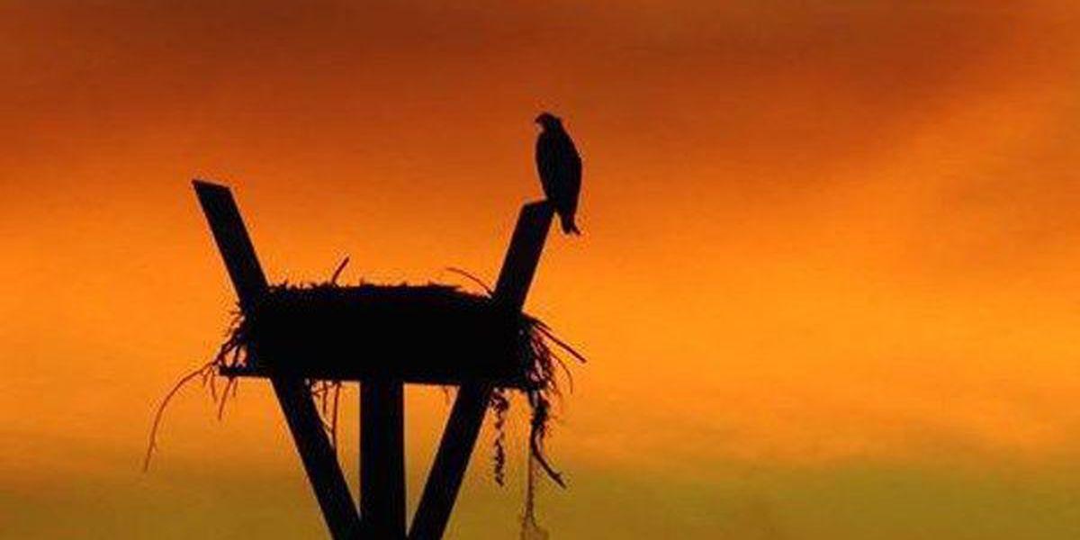 Ken Hare's Natural Alabama: Rare, unusual birds highlight Ornithological Society meeting