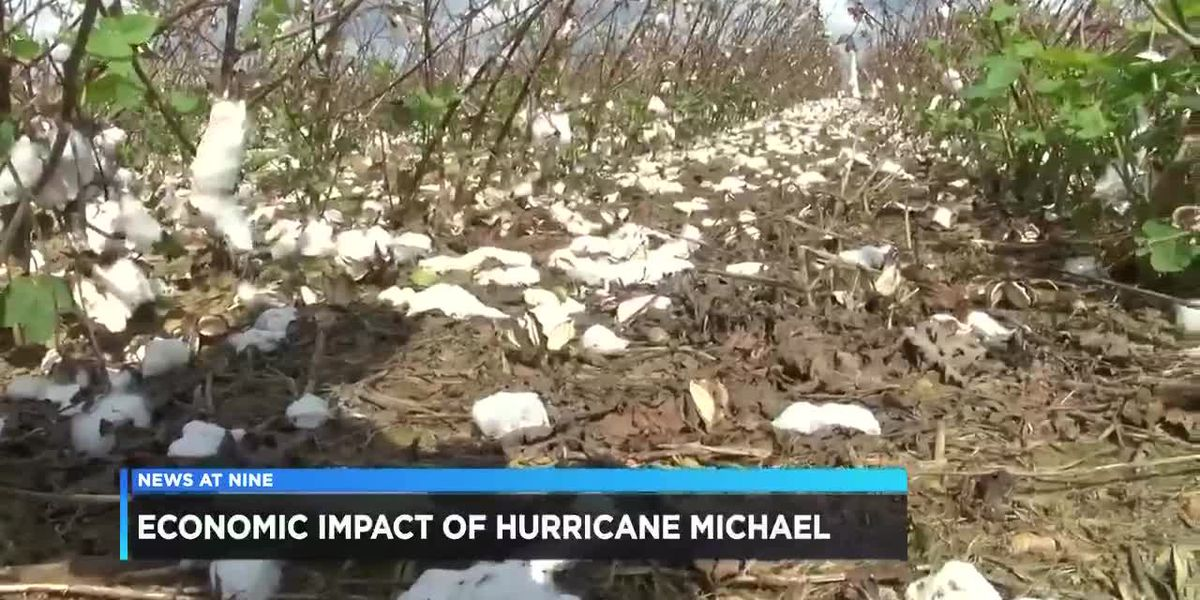 Agriculture damage from Hurricane Michael impacts Wiregrass economy