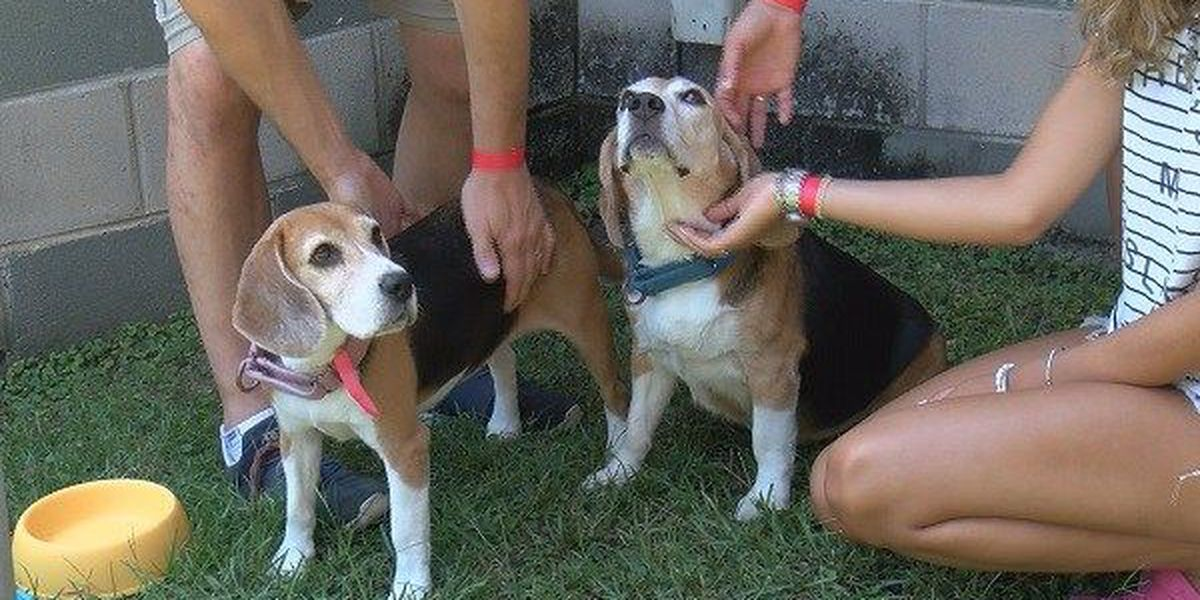 Montgomery Humane Society enters contest to win grants for shelter
