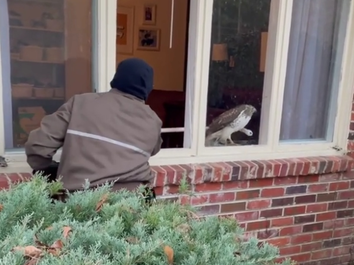 UPS driver delivers help after hawk crashes into home