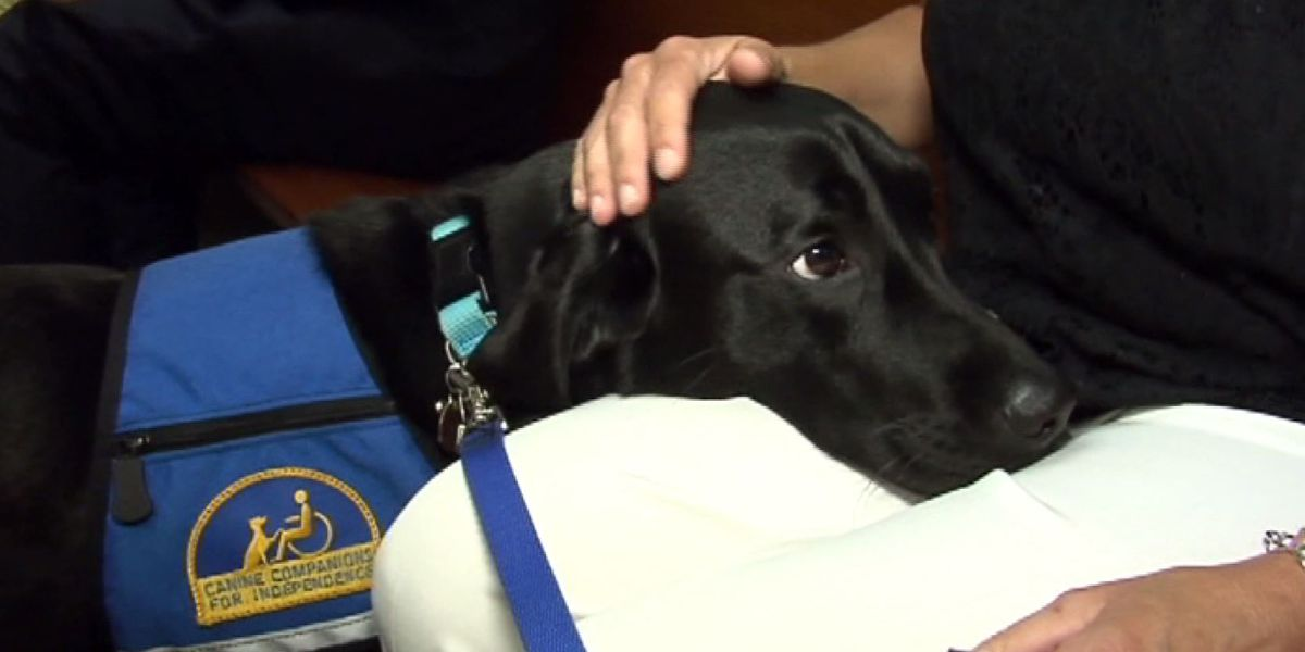 Ala. law aims to penalize people with fake service dogs
