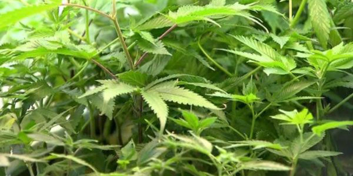 Marijuana bill passes senate committee but faces uphill climb to passage