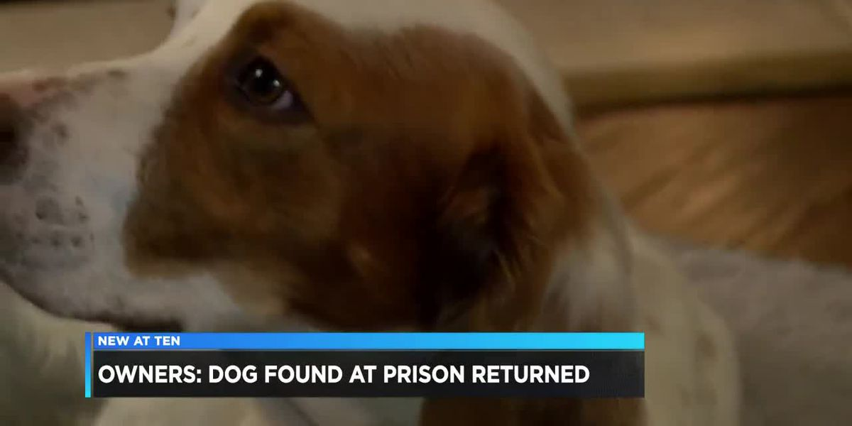 Lost dog returned to owners after being found in an unusual place