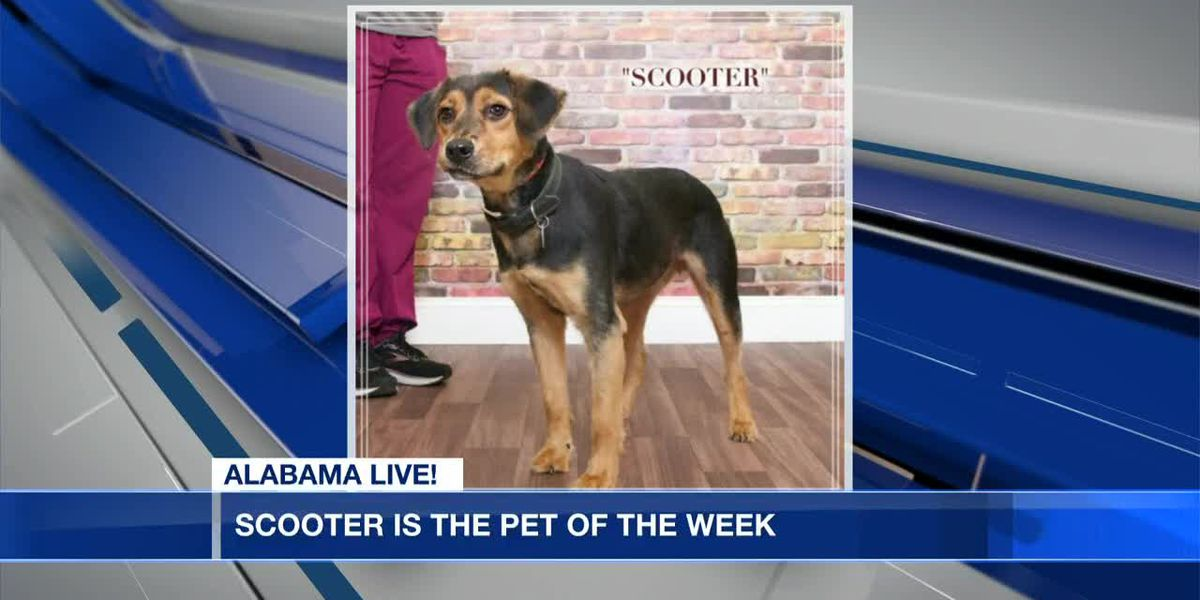 Pet of the Week and Puppy Palooza