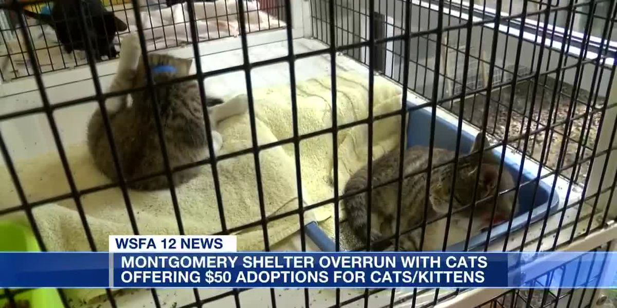Montgomery Humane Society opening new facility for feral cats