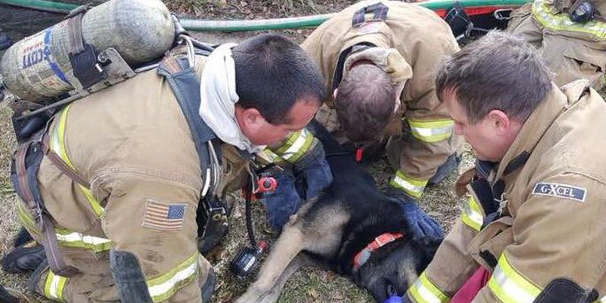 Alex City first responders save dog's life after house fire