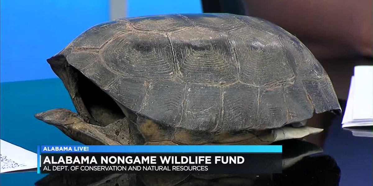 Hundreds of species in AL not for hunting