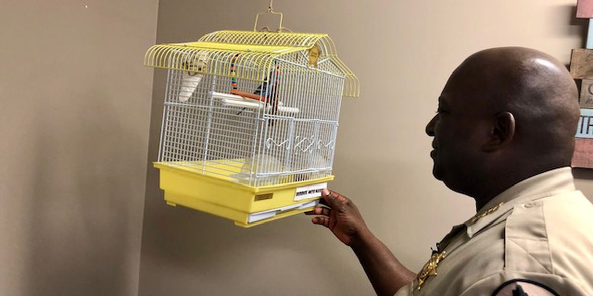 County Road 12: Newest Montgomery Co. Deputy is for the birds