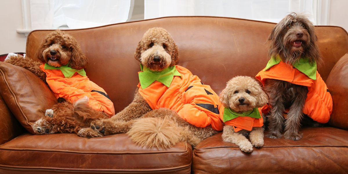 Pet owners will spend nearly half a billion on costumes this Halloween