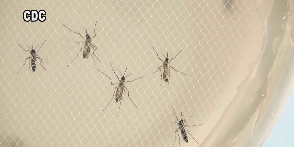 Summer outlook calls for above average mosquito activity in Alabama