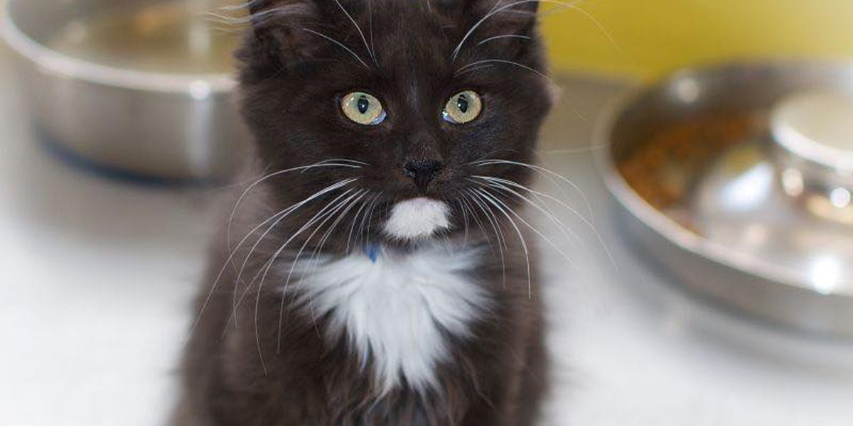 Close to 40 cats adopted at Montgomery Humane Society this weekend