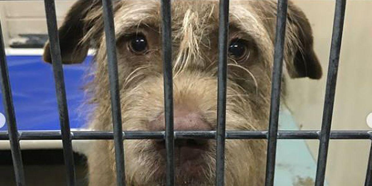 WSFA 12 News adopt-a-thon helps dozens of animals