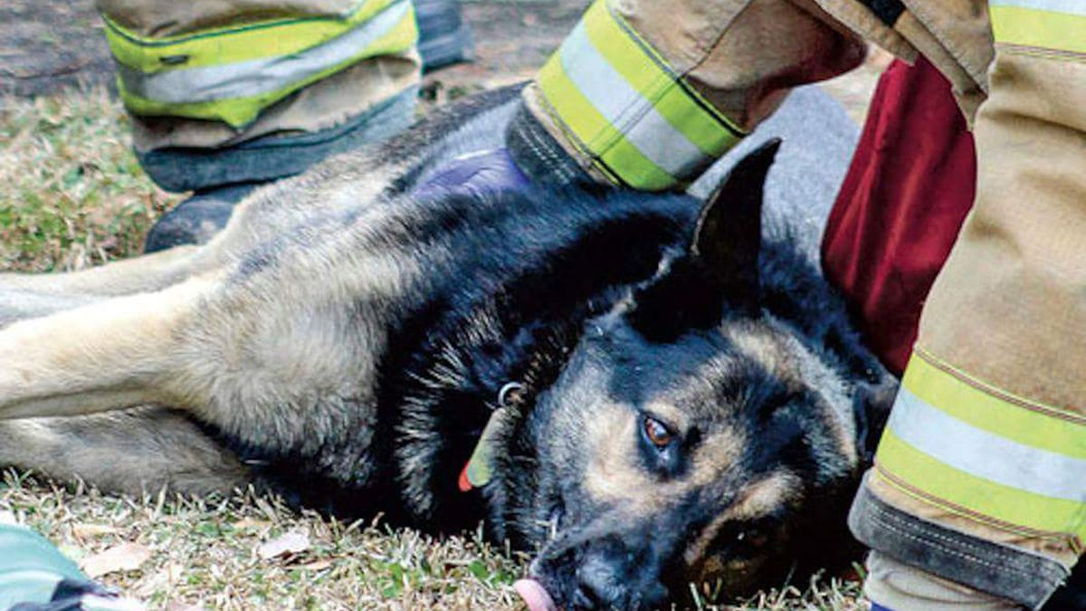 Kits to save dogs' lives donated to Alex City Fire Dept.