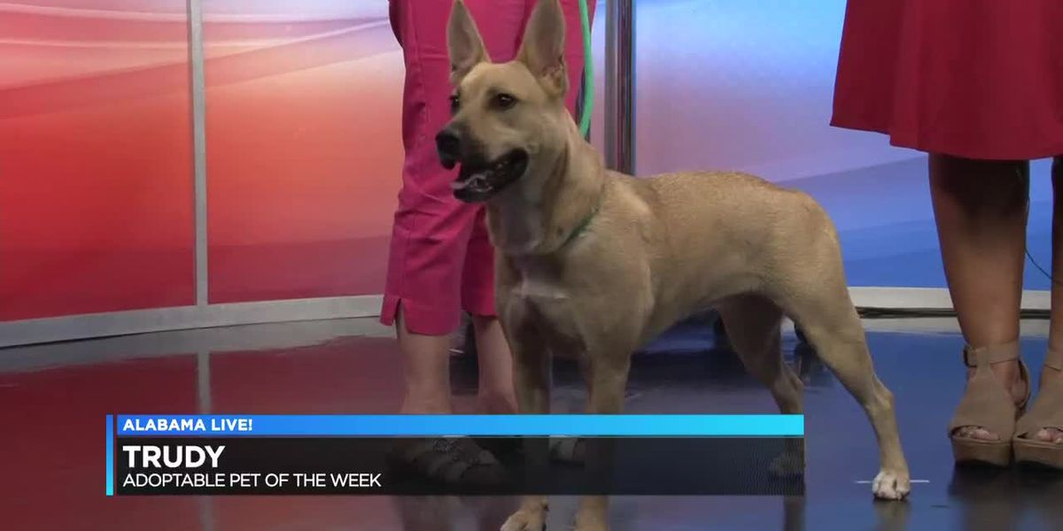 Montgomery Humane Society Pet of the Week: Trudy