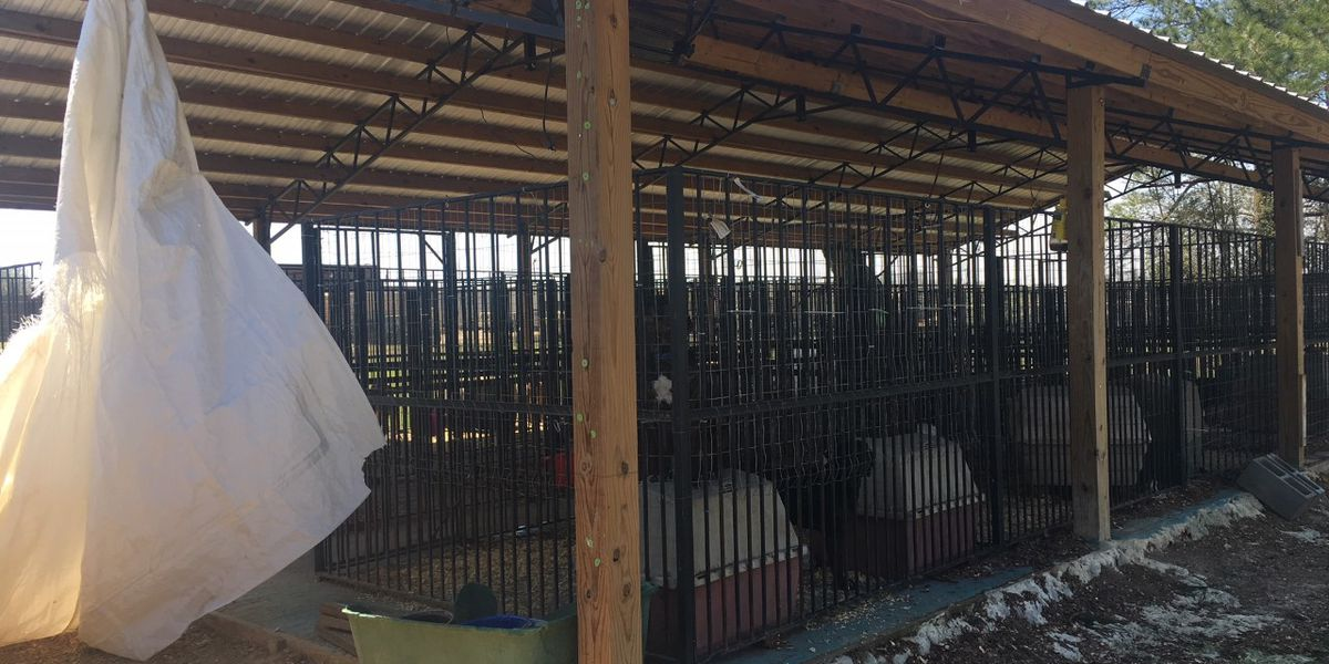 Eufaula animal shelter in need of volunteers for tornado clean up