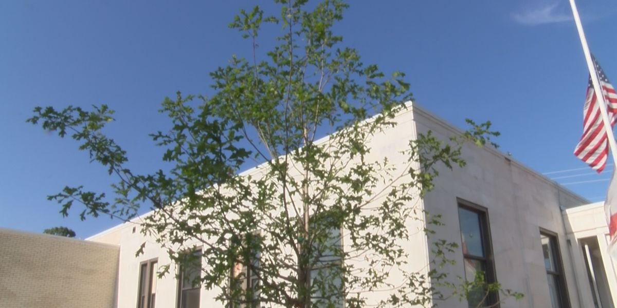 Tree dedication for Prattville native who made an impact on the city