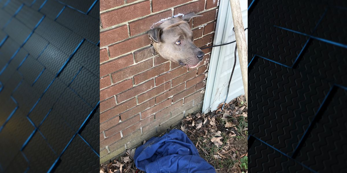 Dog rescued after getting stuck in dryer vent in Albertville