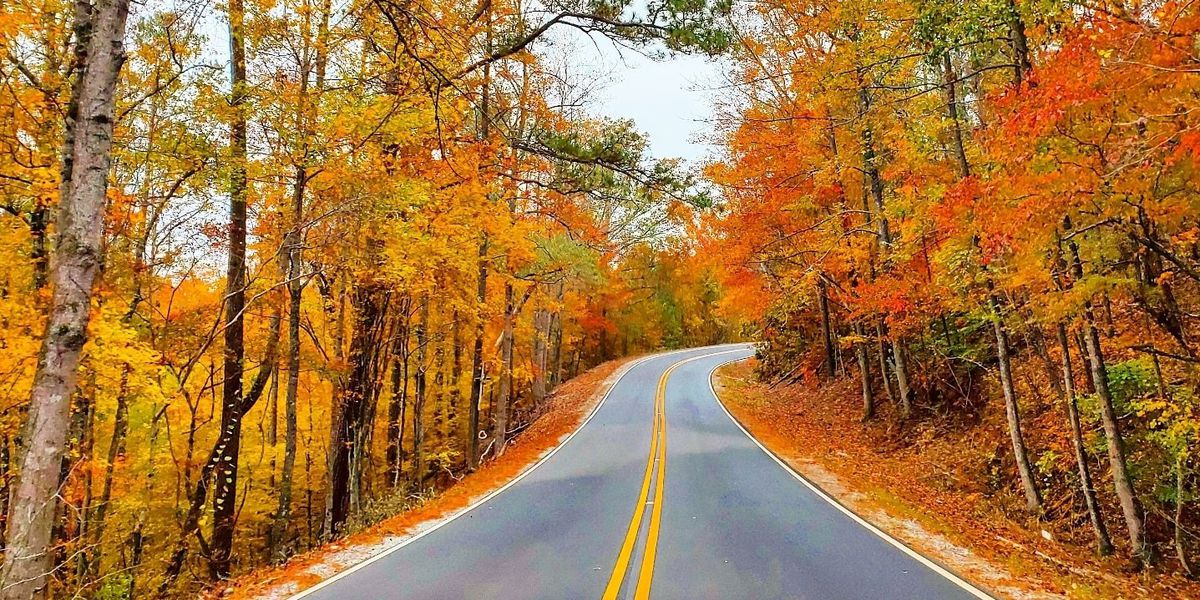 "Fall color taking over parts of Alabama: ""I have never seen it as beautiful!!"""