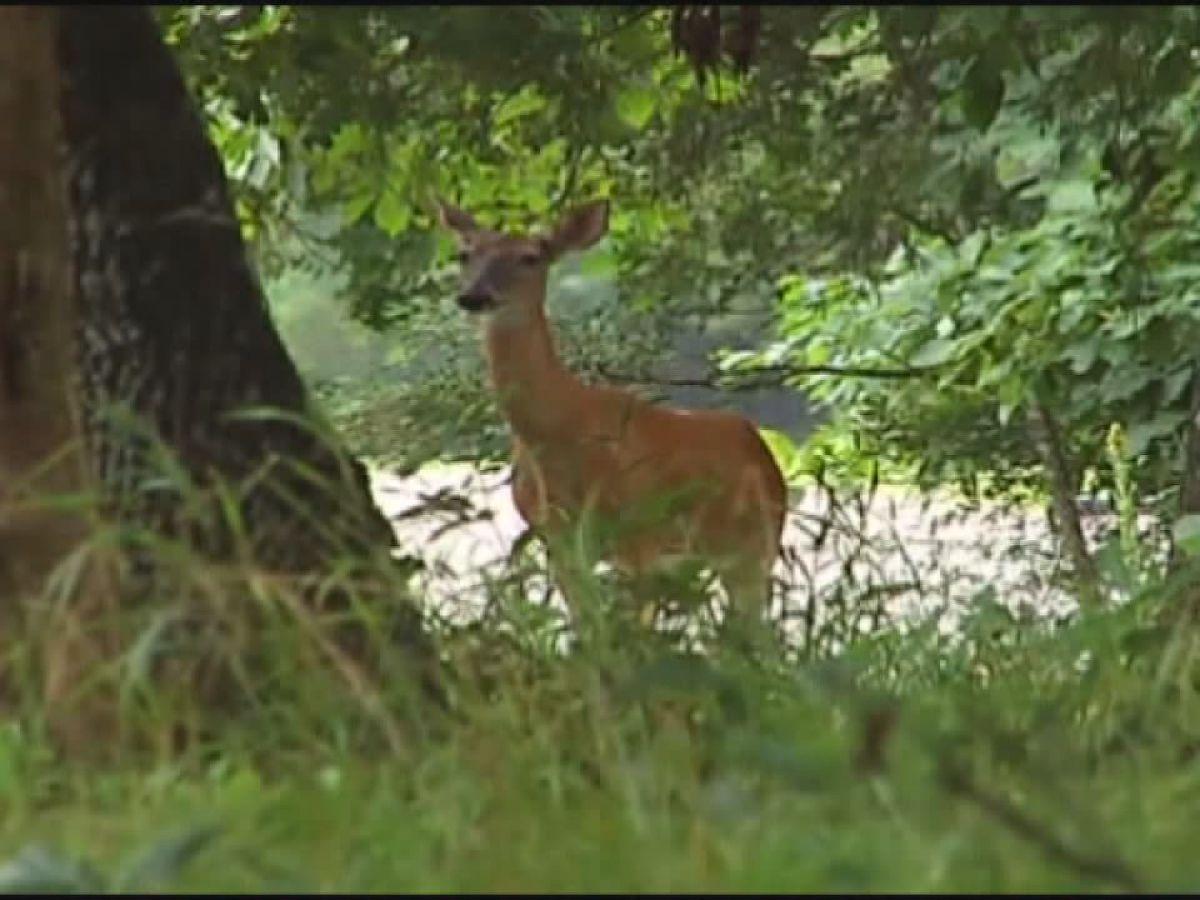 Bow hunting season opens in Alabama