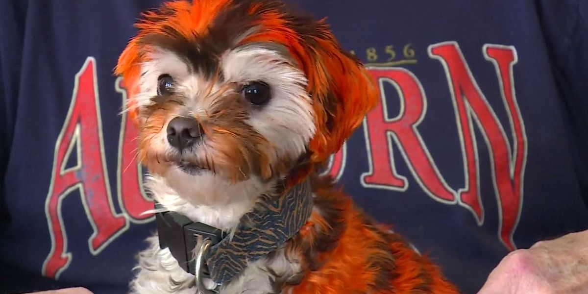 Tiger Jake helps collect donations for pets affected by tornadoes