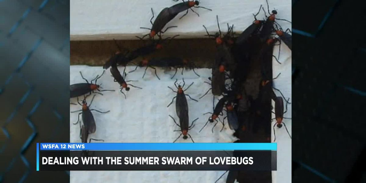 Though annoying, love bugs serve helpful role