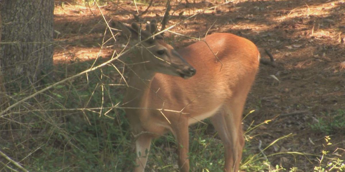Black Belt hunters encouraged to donate deer over MLK holiday weekend