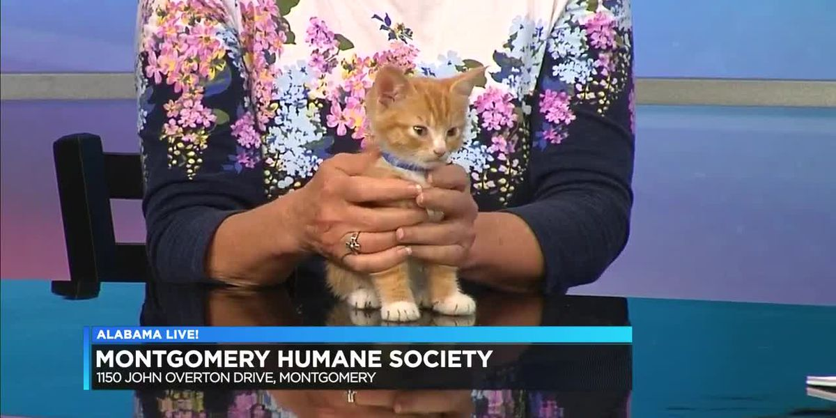 Moses is the Pet of the Week