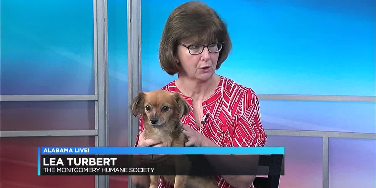Pet of the Week: Brownie