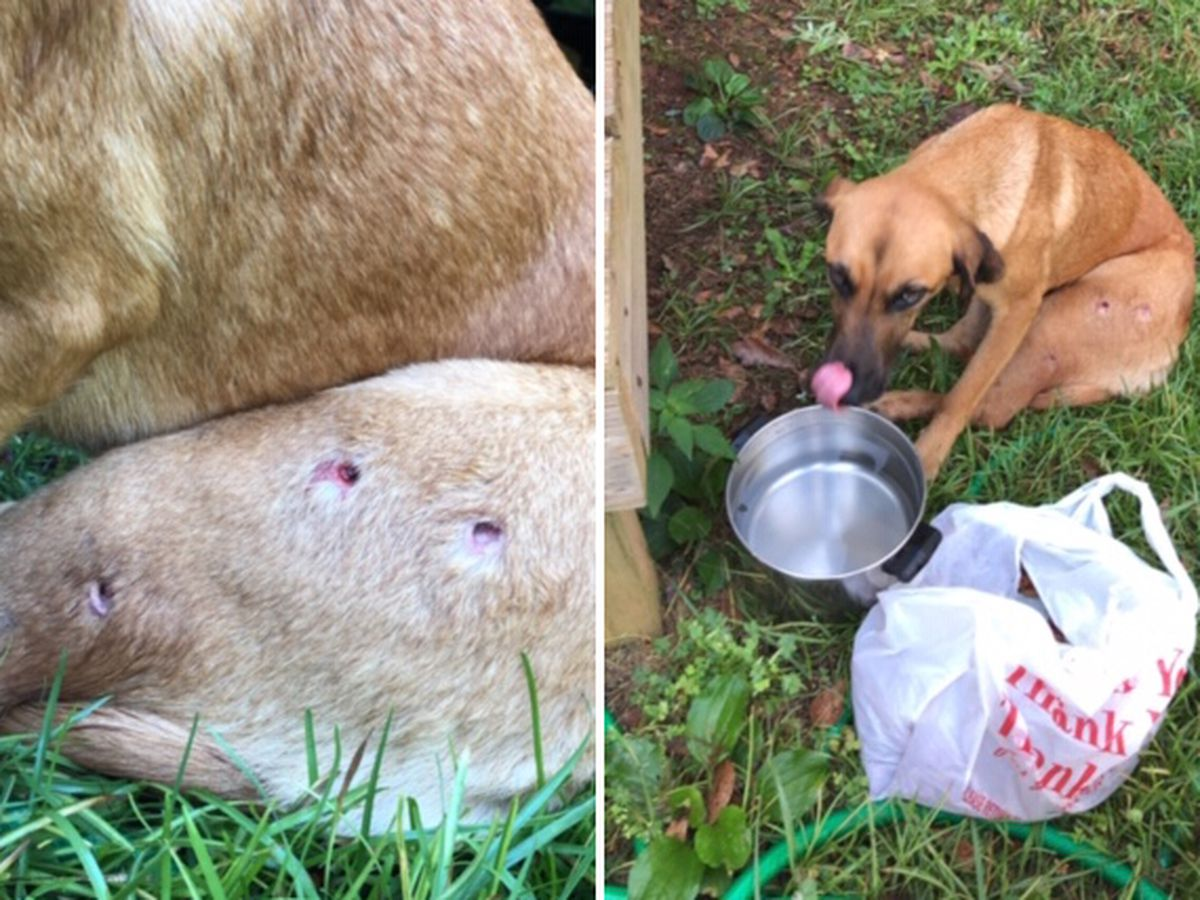 Tallapoosa County puppy shot multiple times