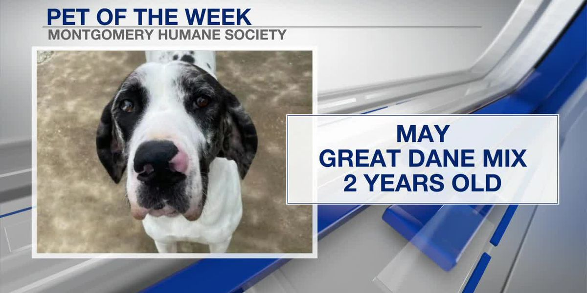 May is the Pet of the Week!