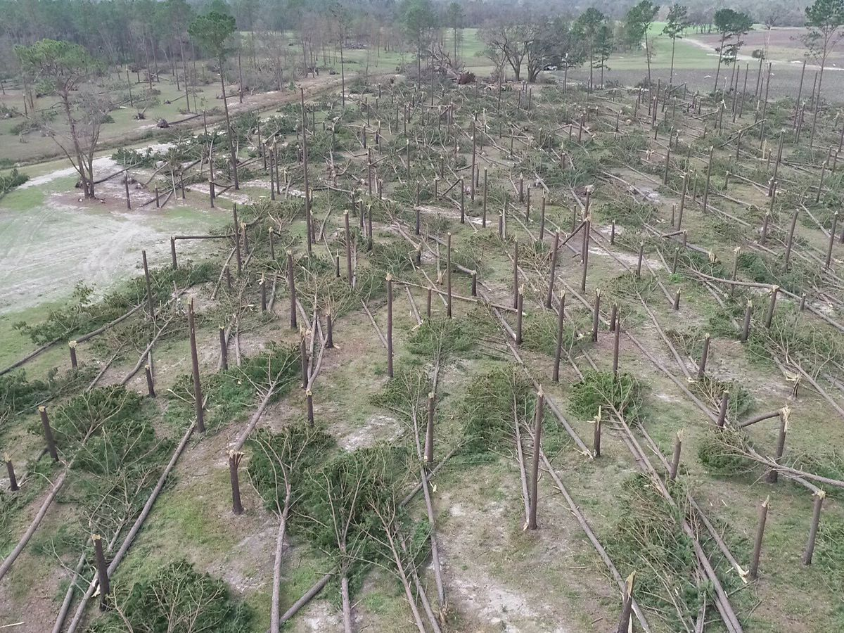 AL timber farmers face significant losses from Hurricane Michael