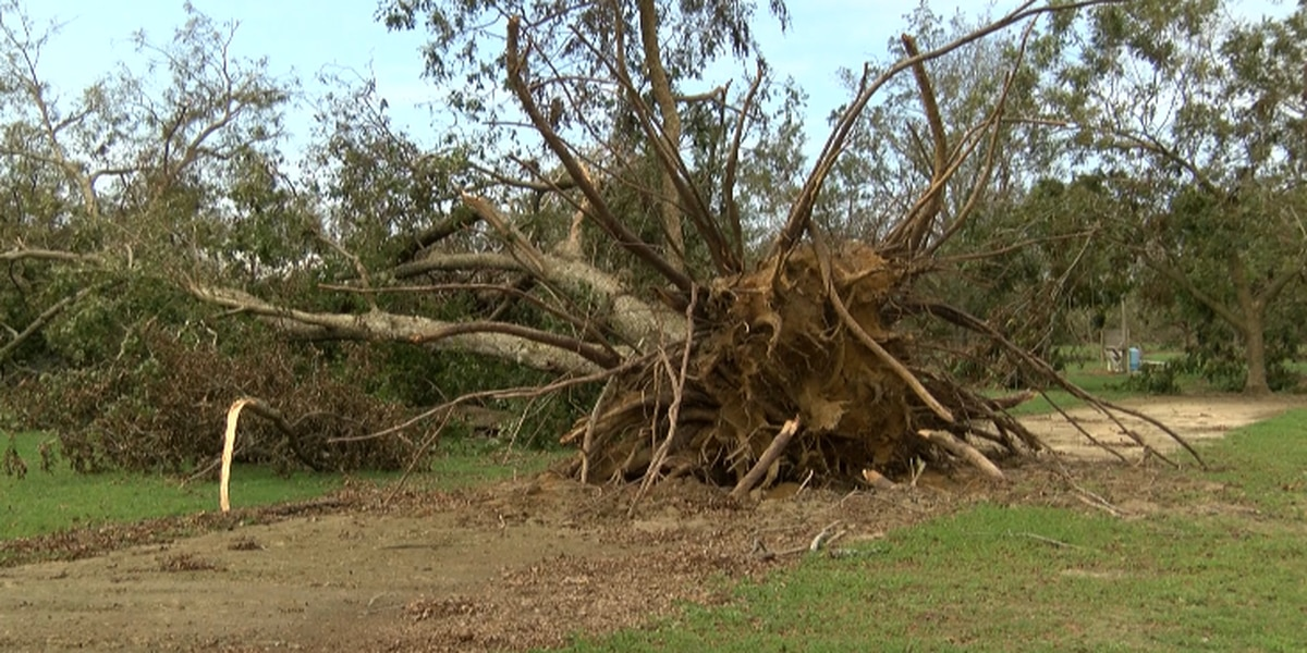'My heart hurts,' Alabama farmer says after hurricane wipes out pecan crop