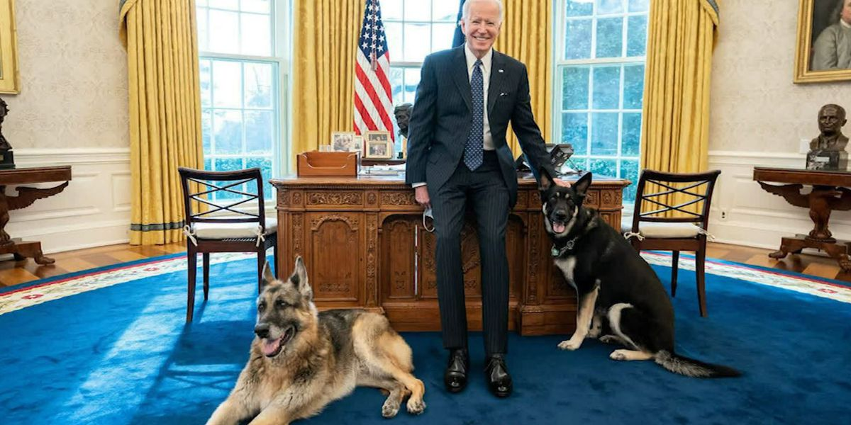 Major training: Biden dog gets help adjusting to White House