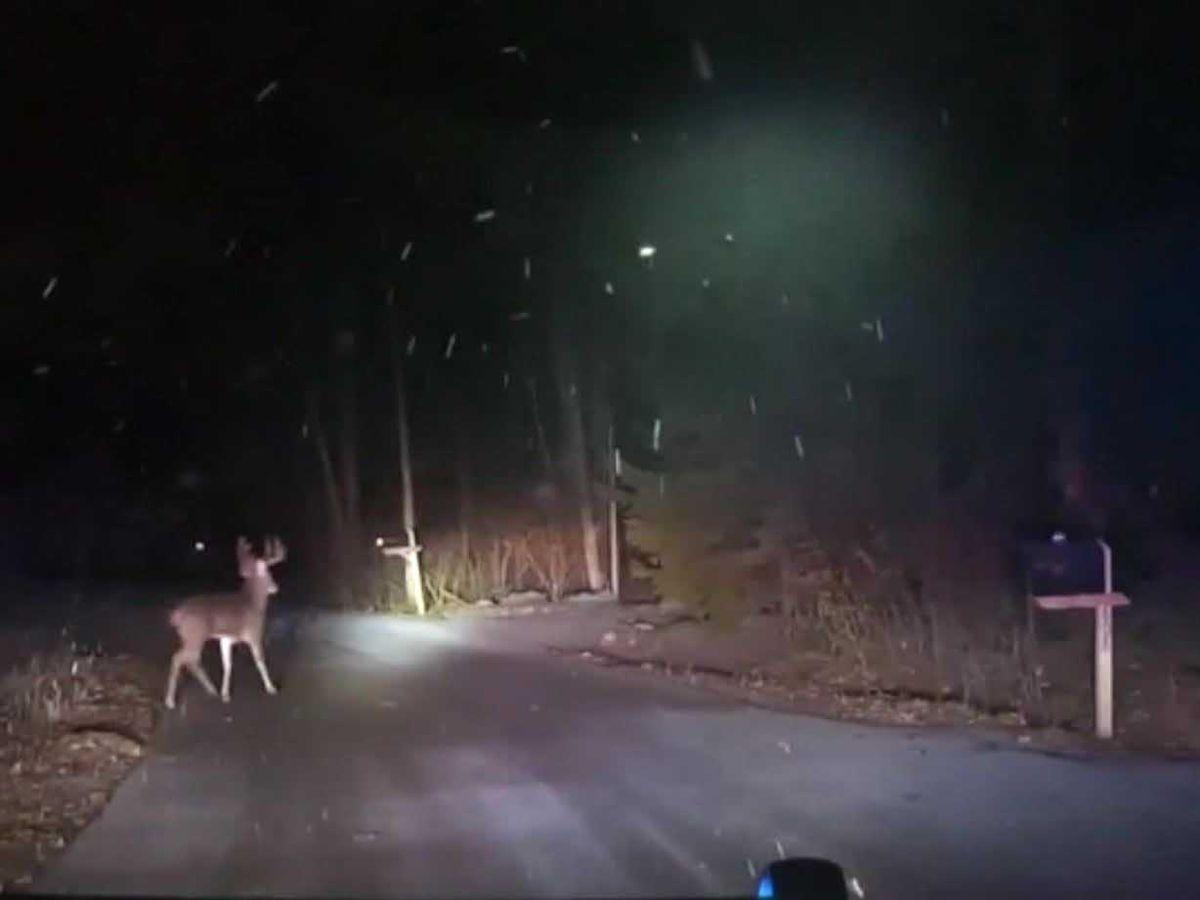 Deer jumps through glass into home