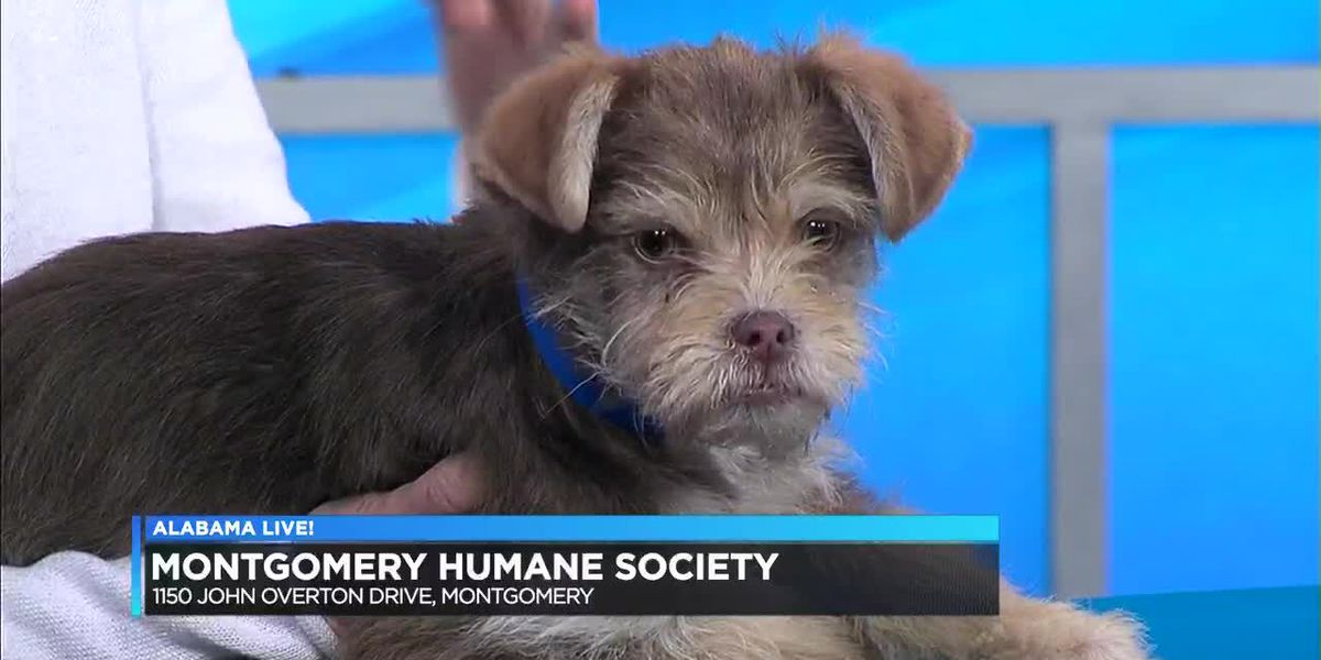 Henry is the Pet of the Week