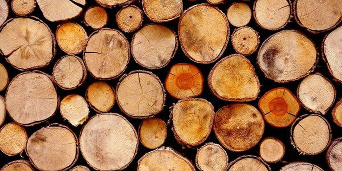 100+ jobs expected with creation of sawmill in Pike County